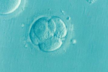 IVF fertility service cuts Healthwatch concern